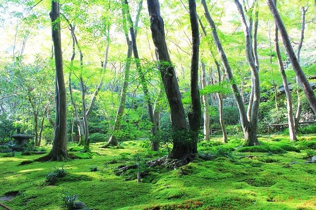 地面が苔で埋め尽くされた林